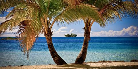 Palm trees in Belize
