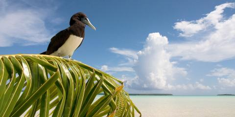 bird on palm in Tahiti