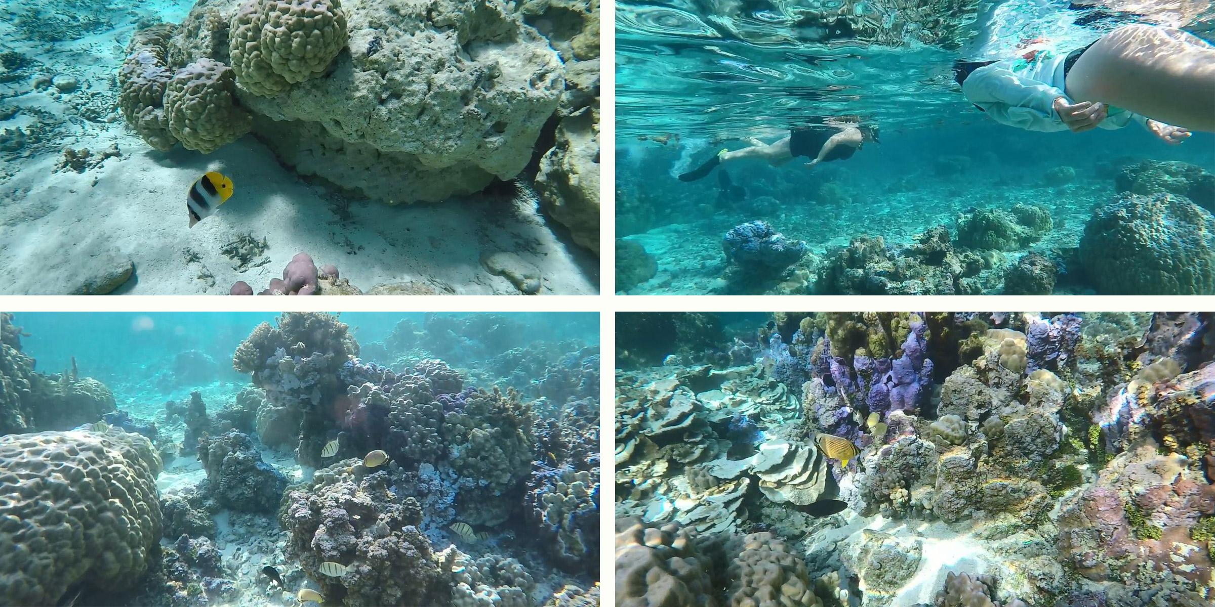 Tahiti snorkeling